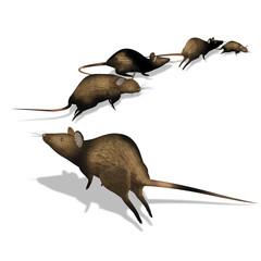 Topi in fuga
