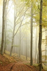 Keuken foto achterwand Bos in mist Lane in the misty autumnal forest in a nature reserve