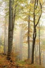 Keuken foto achterwand Bos in mist Path in misty autumn beech forest in a nature reserve
