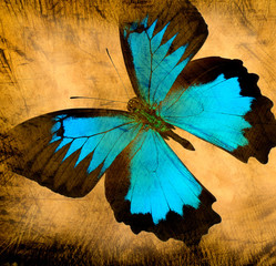 Photo sur Aluminium Papillons dans Grunge old grunge butterfly paper texture background