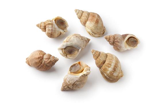 Fresh raw common whelk