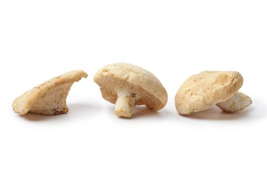 Wood hedgehog mushrooms