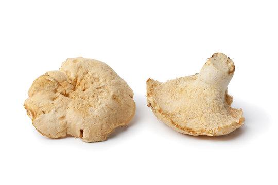 Pied de mouton mushrooms