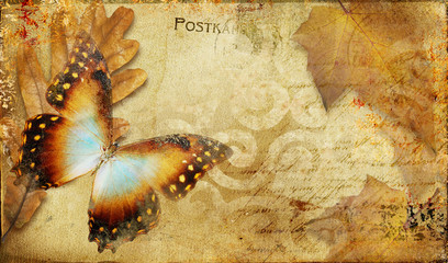 Photo sur Aluminium Papillons dans Grunge vintage autumn card with leaves and butterfly