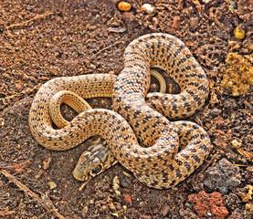 Close up of snake