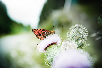 butterfly poised on flower