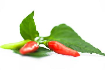 Beautiful young chili