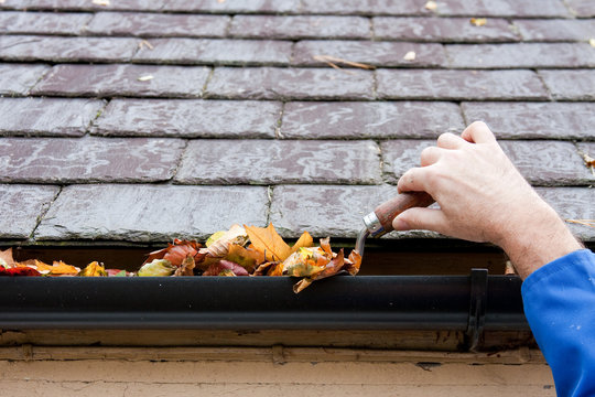 Clearing Autumn Leaves from Gutter with Trowel