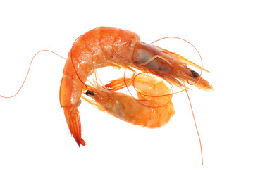 boiled shrimp isolated