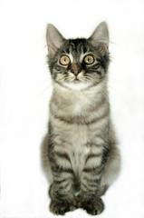 cute cat white background
