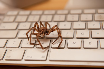 big brown spider on a white keyboard