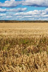 field in autumn