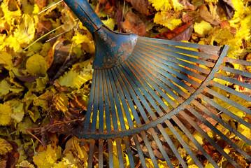 Laub harken - leaves rake 04