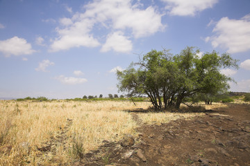 Dry grass and a tree