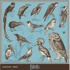 vector set: birds
