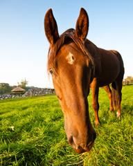 horse looking into camera