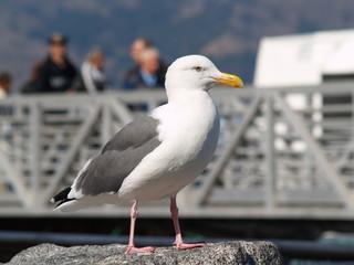 Fly from Alcatraz