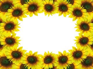 Beautiful sunflower frame