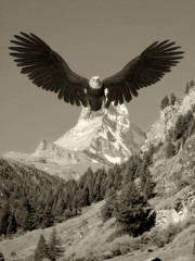 Fototapete - american bald eagle blue sky mountain landing old