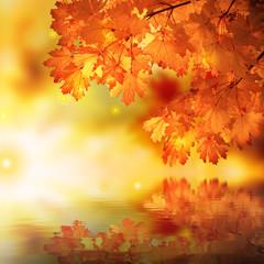 Abstract autumn maple reflexion