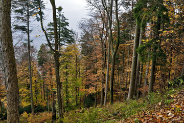 Mountain forest in Autumn