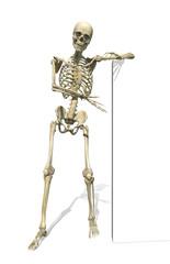 Skeleton Standing Beside Sign or Border - 3d render