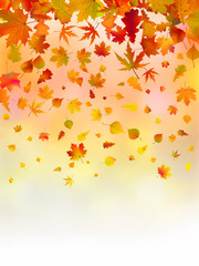 Bright leaves of autumn card.
