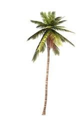 3D Kokosnusspalme freigestellt 01