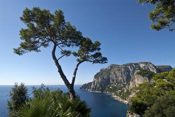 Capri 7159