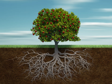 Conceptual tree with apple and root
