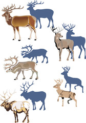 horned animals with shadows
