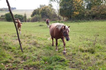 horse walking in a field