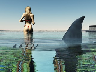 Shark in swimming pool