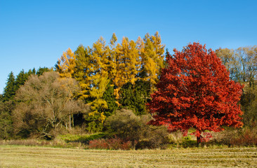 Autumn lanscape colour trees and meadow