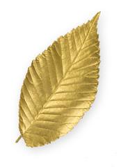 Gold Elm Leaf