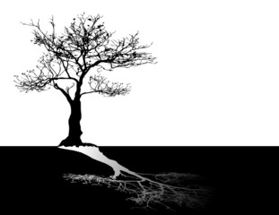 black tree on white sky