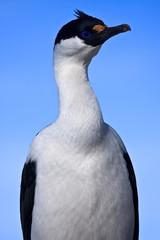 portrait of blue-eyed bird