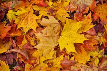 Warm autumn colors background.