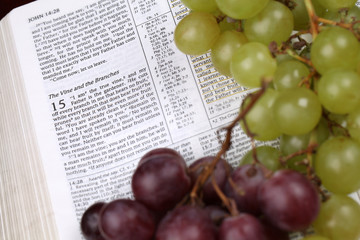 Holy Bible open to John 15 about Jesus being a Vine