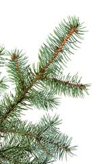 Branch of a fur-tree