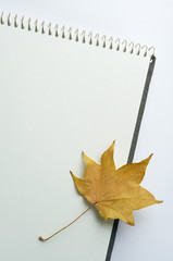 sketchbook and Fallen leaf