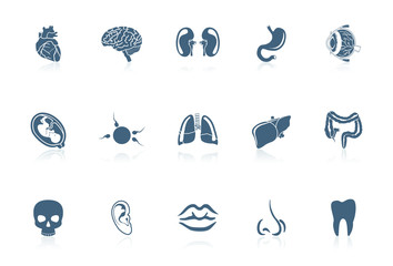Human anatomy | Piccolo series