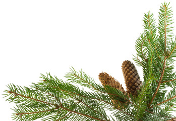 fir branches and cones as frame
