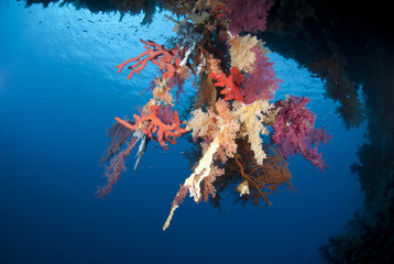Vibrant and colourful underwater tropical coral reef scene.