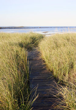 Path through dune grass to get to the beach