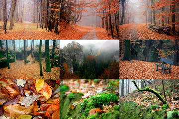 Forest Czech Paradise in golden autumn in october