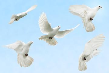 White dove in flight Wall mural