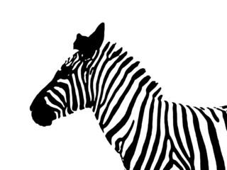 zebra sagoma