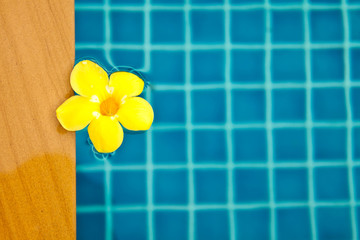 Yellow flower float in the pool