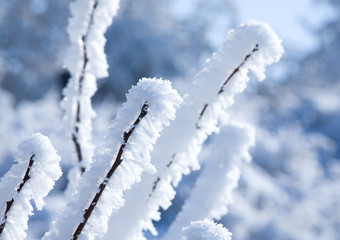winter - branch with snow